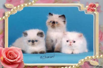 3 pearly frame.jpg