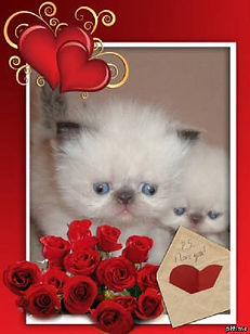 kits roses hearts.jpg