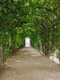 Leaf Archway at Schönbrunn