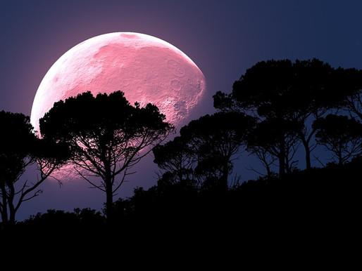Pink Full Moon!