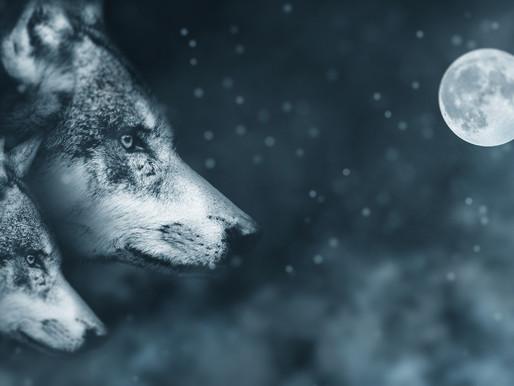 January Cancer Moon