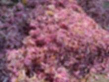 Sakura Marc-Henri Arfeux