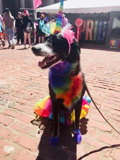 dog rainbow.jpg