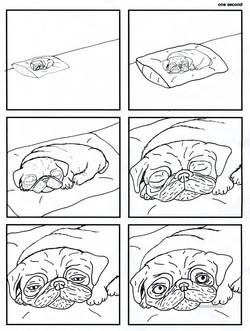One Minute in the Life of a Pug