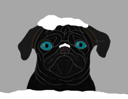 Snow Pug