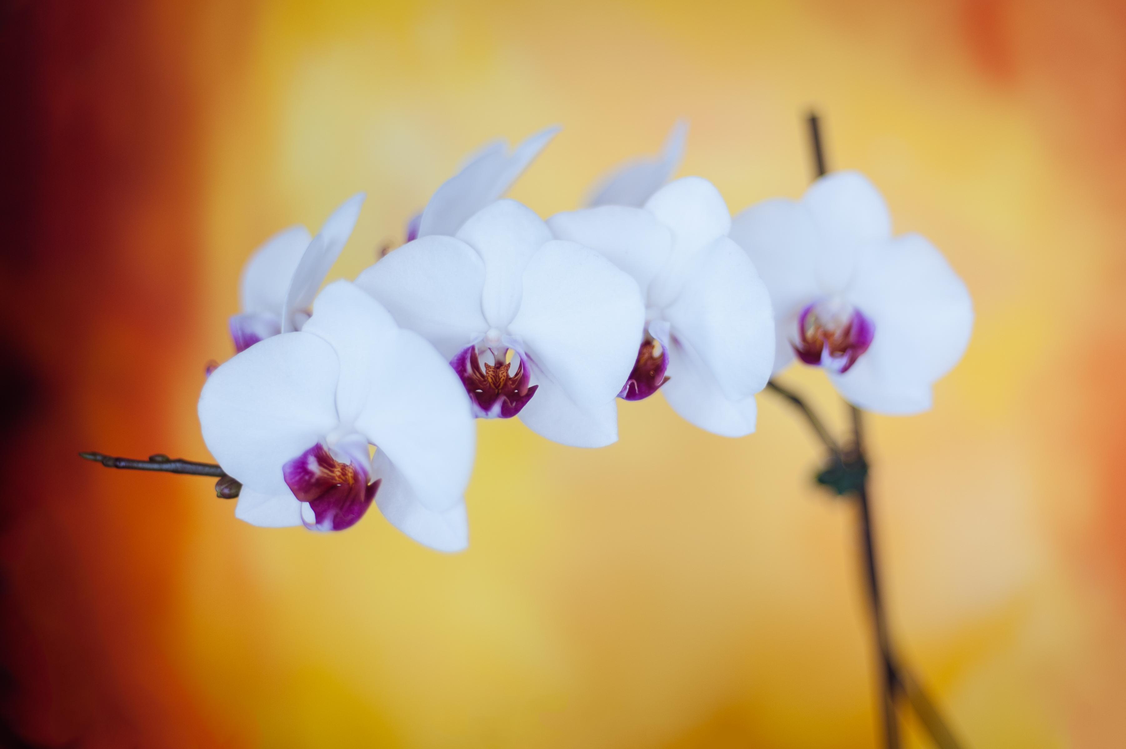 orchids-1341-Edit
