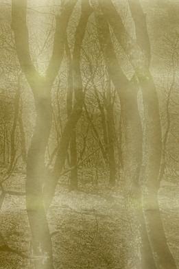Sima_LEVIN-White_memory-FRAGMENT1.jpg