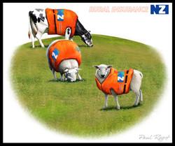 NZInsurance-Paul-Roget.jpg