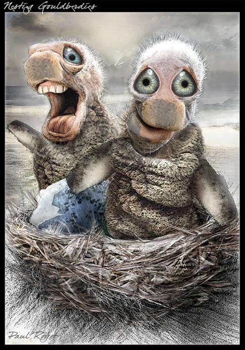 paul-roget-Nesting-Goulberdies.jpg