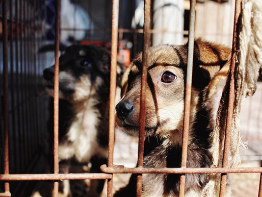 Rising Instances of Animal Abuse in India