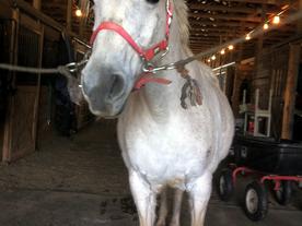 Sunday Pony Update!