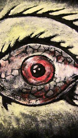 fish eyelashes
