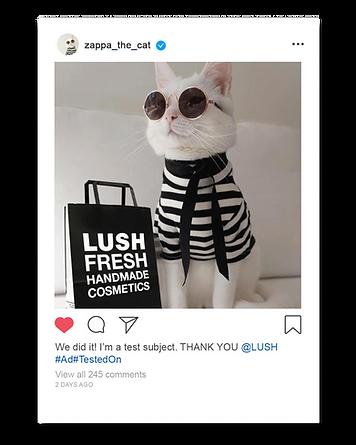Lush_thankyou_cat.png
