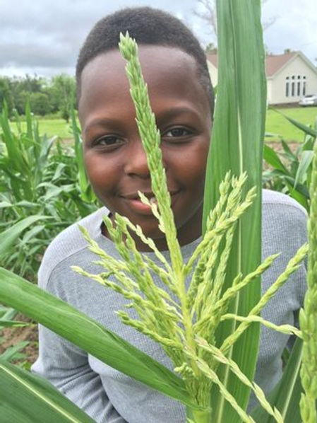 kid-and-wheat_orig.jpg
