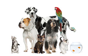 petstravelwithus Pet courier, animal transport, pettravelswithus.com