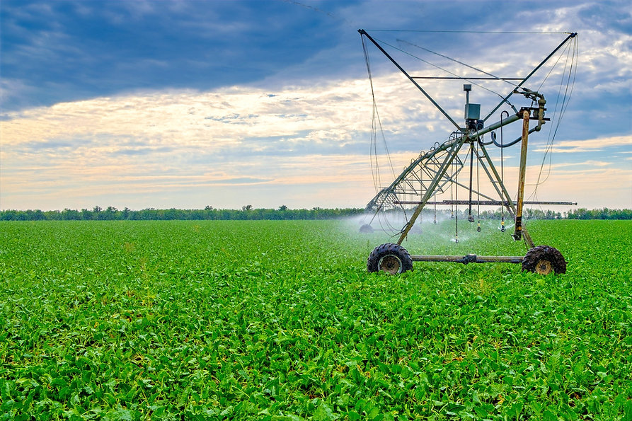 watering-beets-in-a-large-field-using-a-