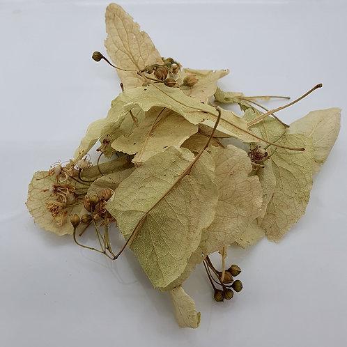 Tilleul - Tilia Platyphyllos