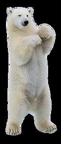 Vik Polar Bear
