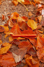 Pumpkin Spice 1.0(2).jpg