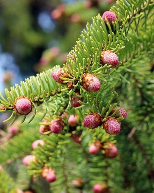 tree-3365852_1920.jpg