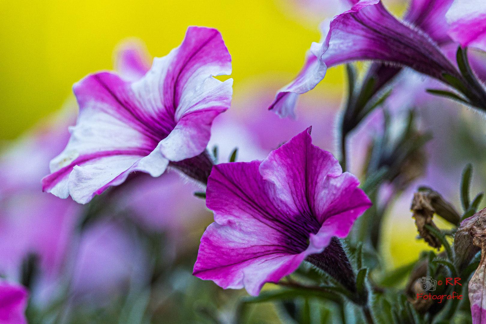 2020.06.12 Drossel und Blumen-106.jpg