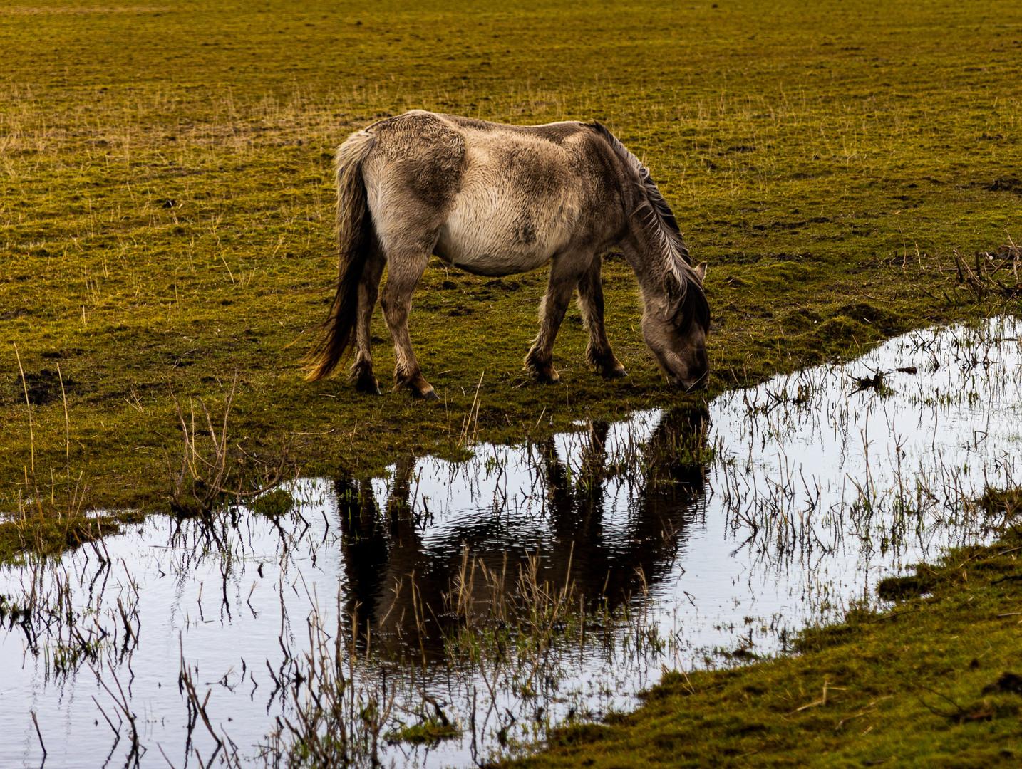2020.02.29 Speicherkoog Pferde-101.jpg