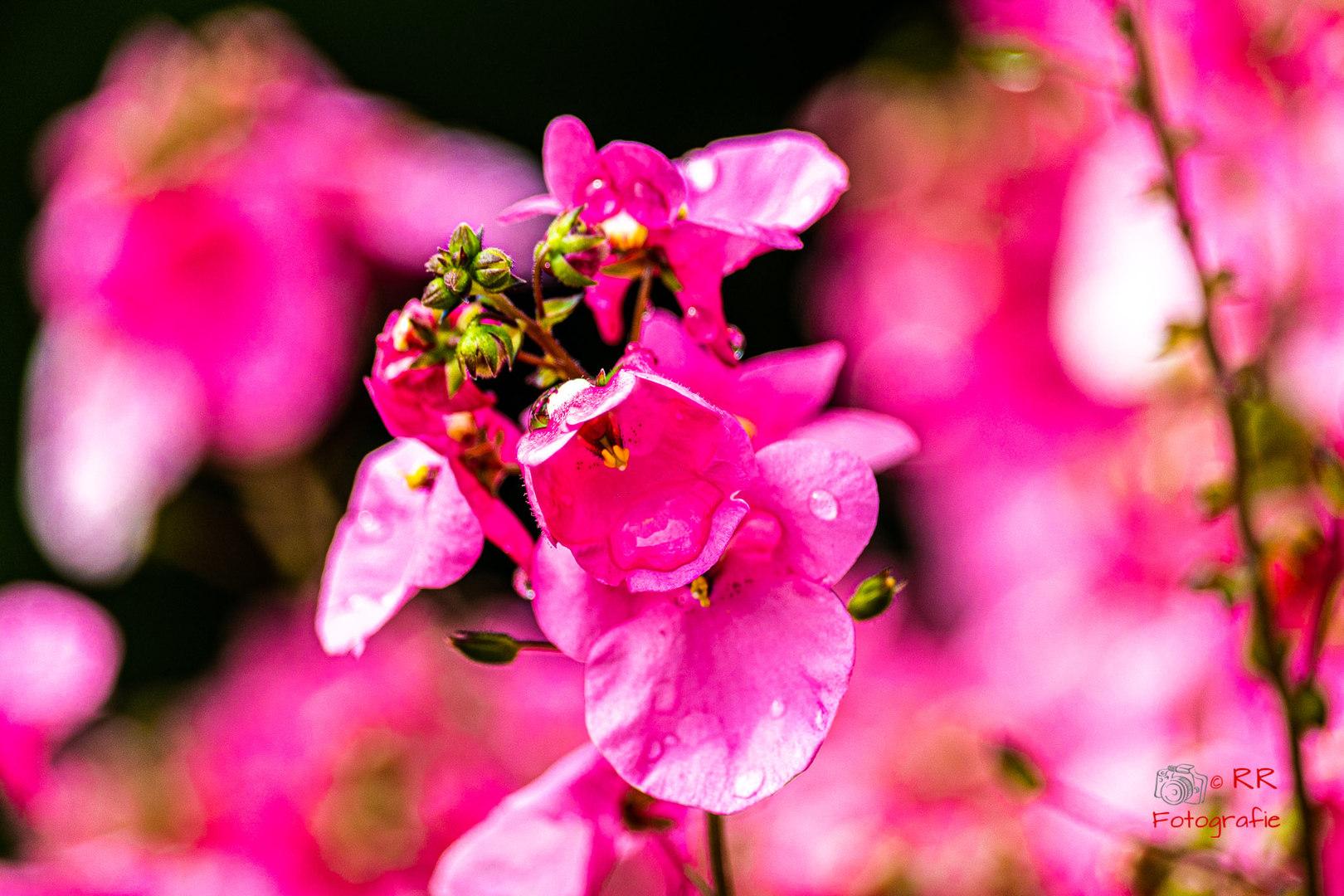 2020.06.12 Drossel und Blumen-118.jpg