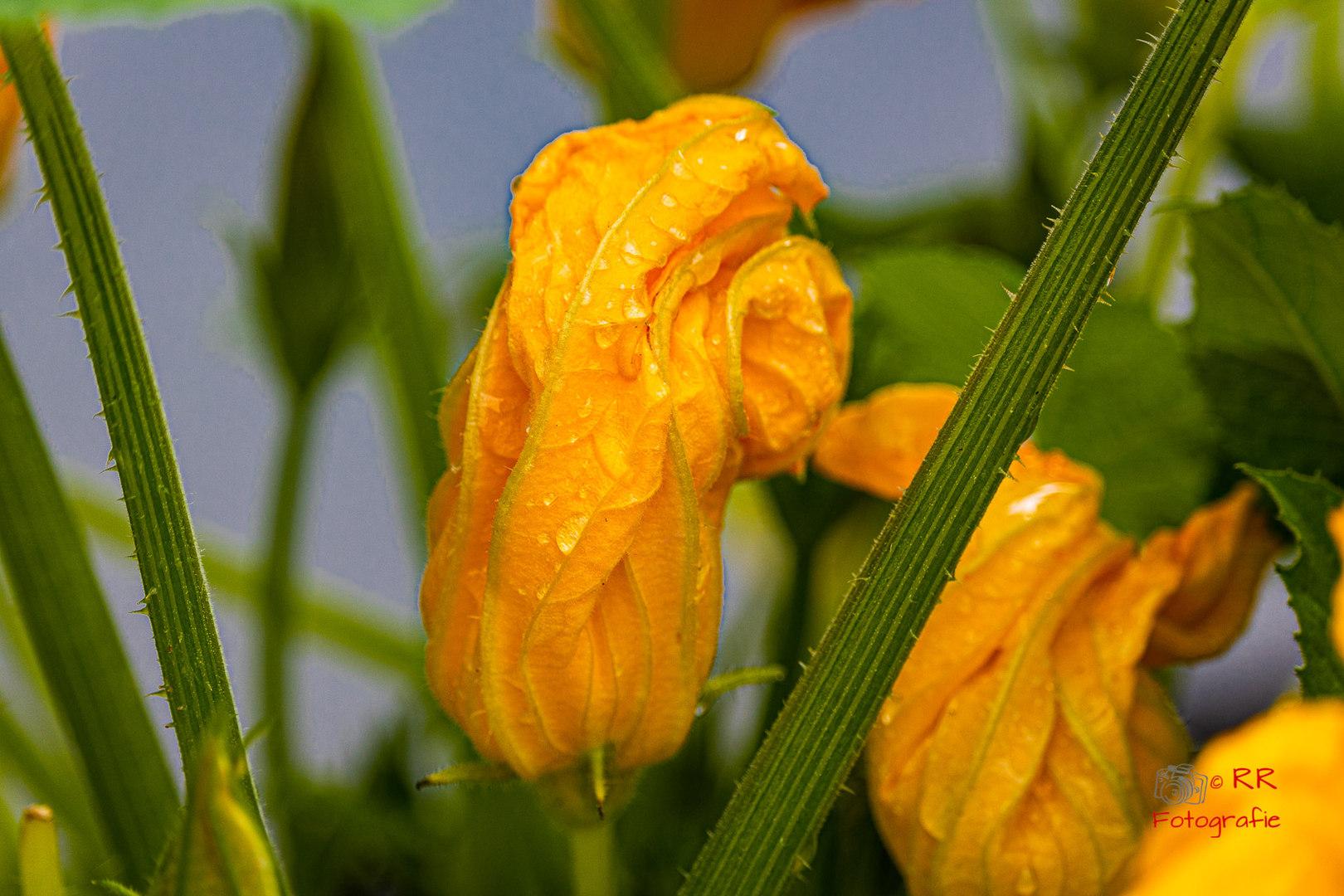 2020.06.12 Drossel und Blumen-116.jpg