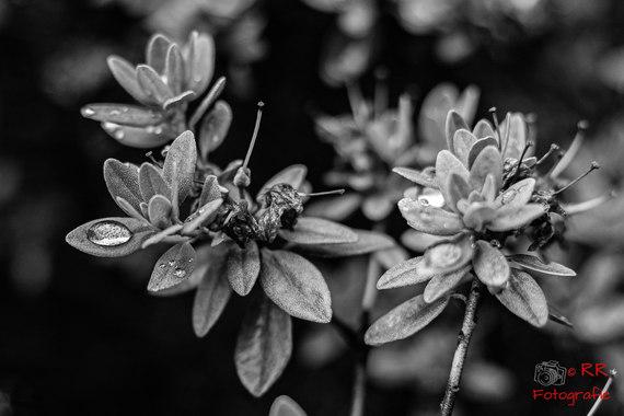 2020.07.20 Garten nach Regen-103.jpg