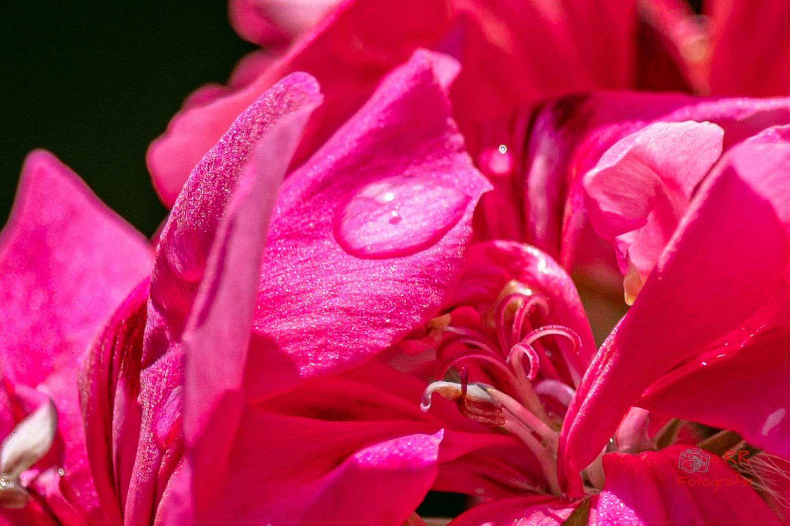 2020.06.12 Drossel und Blumen-122.jpg