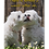 Thumbnail: DOG DAISY