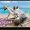 Thumbnail: CAT ON BEACH