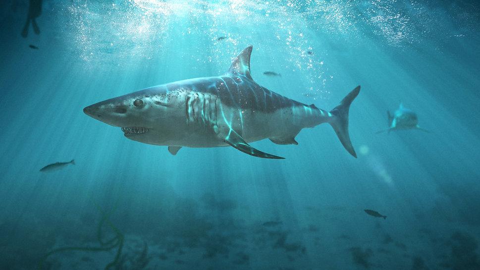 Shark Art.jpg