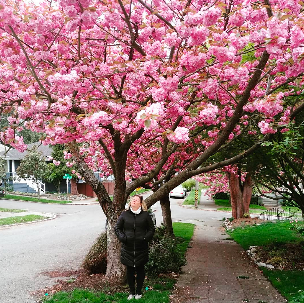 blonde blogger seattle - chinese cherry tree blossoms seattle