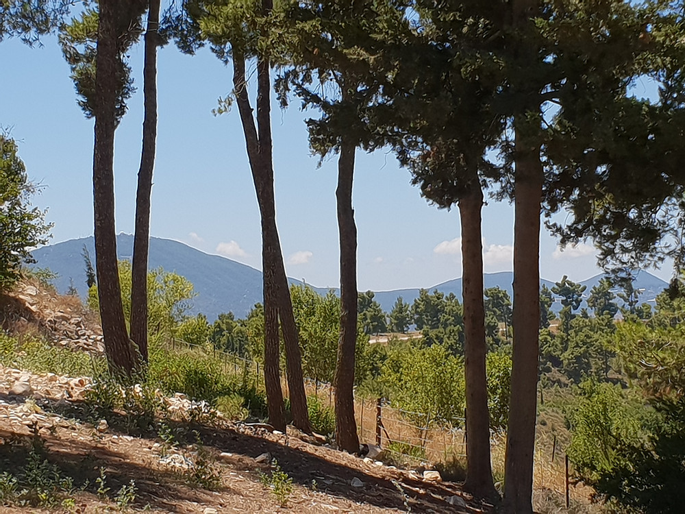 Byria Forest and Holy Mount Meron