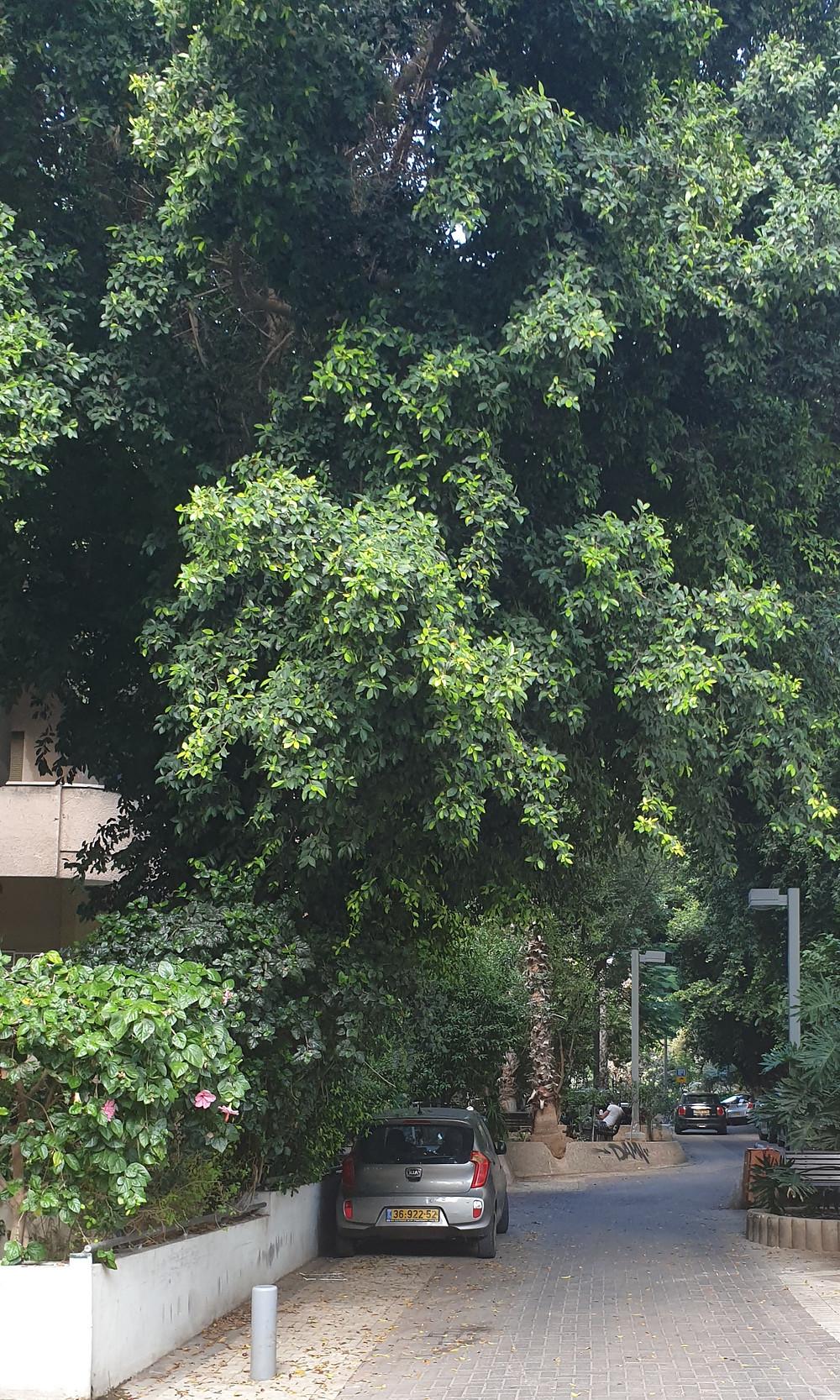 Green Lev Ha Ir street