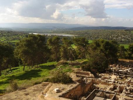 BEAUTY OF ISRAEL - TZIPORI
