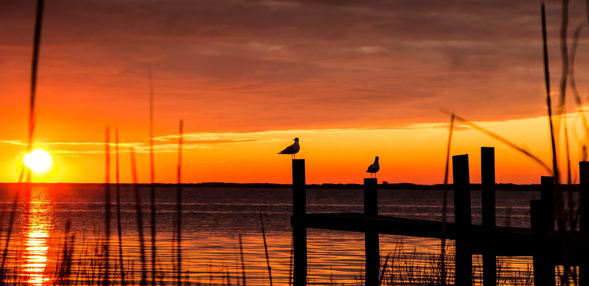 Morning Gulls