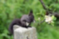 Natur Eichhörnchen