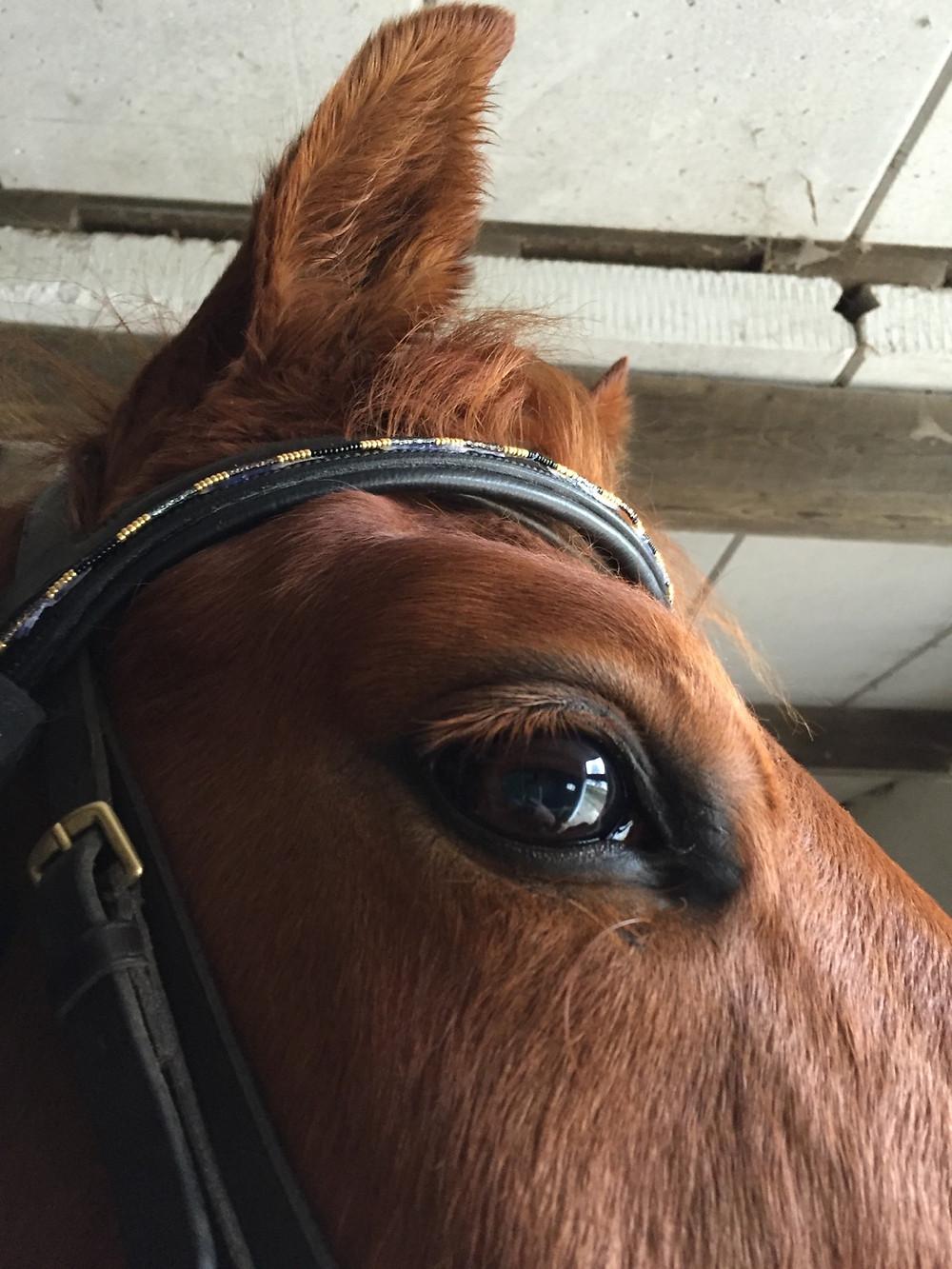 Horse wearing OOAK band