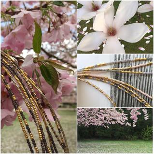 Photoshoot & cherry blossom