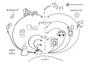 Circular Strategy & Opportunities