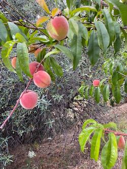 Fruits tree.