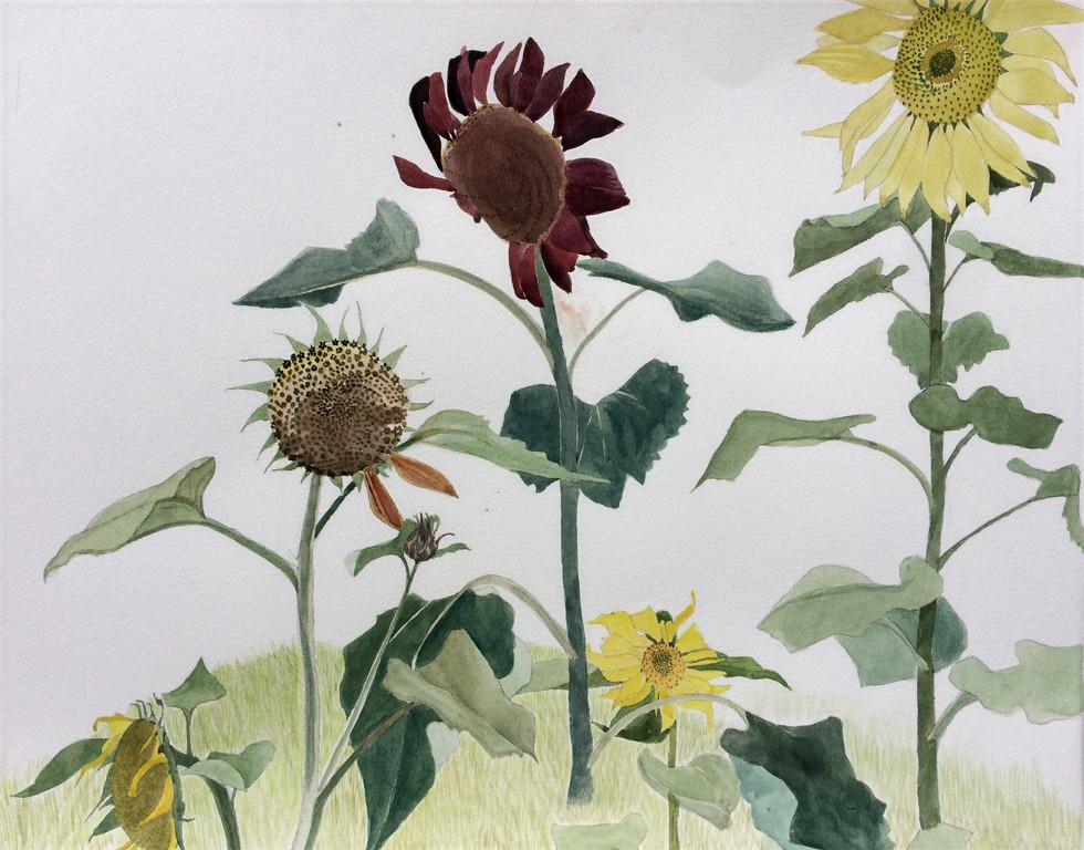 Cheeky Sunflowers