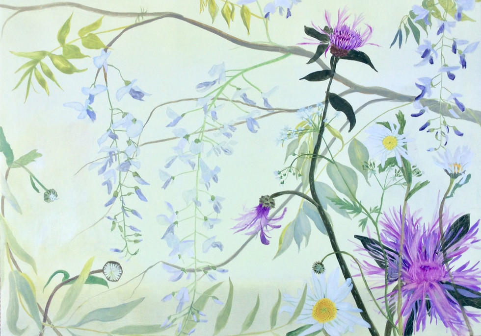 Daisies, Wisteria and Knapweed