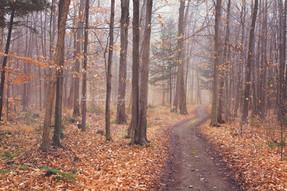 paysage forêt Verchères