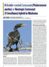 nab-cormorants.jpg