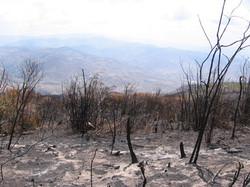 Parte media de la montaña