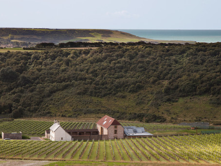 Best English Wine Producers to Discover this Summer