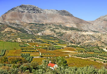 Crete vineyard.png
